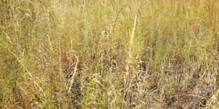 weeds imagem de stock royalty free