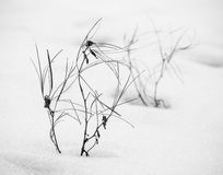 Weeds in winter Stock Image