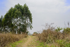 Weedy countryside footpath in cloudy spring afternoon Stock Images