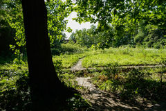Weedy cross way in sunny summer afternoon Royalty Free Stock Images
