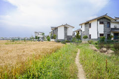 Weedy footpath along wheat field before village in sunny summer Royalty Free Stock Images