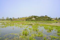 Weedy irrigated lands before woody hill in sunny spring Stock Photo
