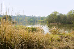Weedy lakeside in sunny spring Stock Images