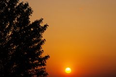 Weedy Plant Against the Sunset. Weedy Plant Against the  Sunset Stock Photos