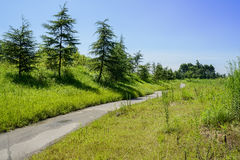 Weedy rural way in sunny summer Stock Images