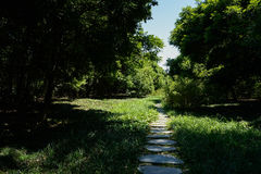 Weedy slab-paved path in woods of sunny summer Stock Image