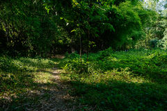Weedy trail in sunny summer afternoon Stock Photo