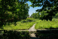 Weedy unpaved cross way in sunny summer Stock Photography