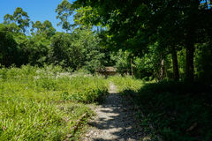 Weedy unpaved path before hut in woods on sunny summer day Royalty Free Stock Photo