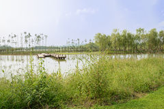 Weedy waterside of lake in sunny summer Royalty Free Stock Photos