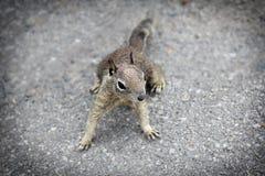 Week 7 (February 15-21) Squirrels Stock Photos