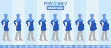Week na week zwangerschapsstadia van zwangere moslimvrouw met isla Stock Afbeeldingen