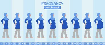 Week by week pregnancy stages of pregnant muslim woman with isla. Mic Clothing. All the objects and body stages are in different layers and the text types do not Stock Images