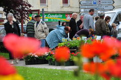 Weekend Plant & Flower Sale in La Gacilly, France Royalty Free Stock Photo