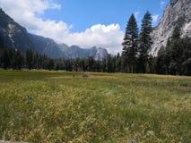 Weekendescape da natureza de Yosemite Imagem de Stock