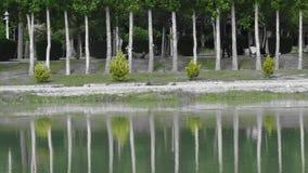 weekendvakantie in Iran, bomen in water worden weerspiegeld dat Stock Afbeelding