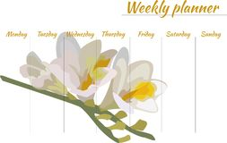 Weekly with beautiful flower on the background. Weekly with beautiful white flower freesia in the background, comfortable planning of the week, gift, stationery Stock Photography