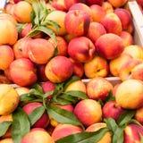 Weekly market Tuscany Stock Image