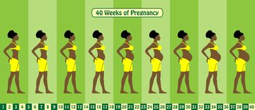 40 Weeks of pregnancy stages with Afro American woman wears bra vector illustration