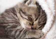 3 weeks sleeping baby kitten Stock Photos