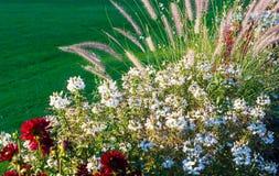 Weelderig bloeiend bloembed met kleurrijke mengeling van de zomerbloemen Stock Fotografie
