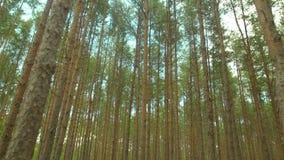 Weelderig bos tegen hemel stock footage