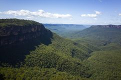 Weelderig groen bergregenwoud met eucalyptusbomen stock foto's