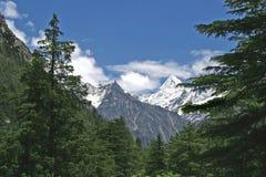 Weelderig groen himalayan bos en sneeuw een hoogtepunt bereikte vallei India Royalty-vrije Stock Fotografie