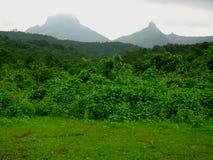 Weelderig groen landschap stock foto