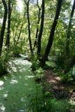 Weelderig groen moeras en tropische bosscène stock afbeelding