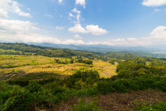 Weelderig groen padieveld, expansief landschap in Indonesië royalty-vrije stock foto