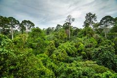 Weelderig groen tropisch regenwoud stock foto's