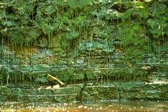 Weelderig groen wildernis en water Stock Afbeeldingen