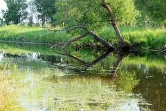 Weelderig landschap Royalty-vrije Stock Afbeelding