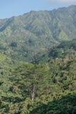 Weelderig landschap Stock Afbeelding