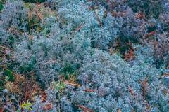 Weelderig mos in een bos royalty-vrije stock foto
