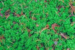 Weelderig mos in een bos stock foto's
