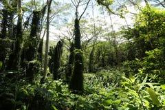 Weelderig regenwoud Stock Afbeeldingen