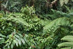 Weelderig regenwoud op Hawaï Stock Fotografie