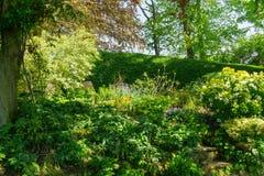 Weelderig rijk gebladerte in een goed gehouden tuin stock foto's