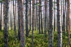 weelderig vroeg de lentegebladerte - trillende groene de lente verse bladeren van Royalty-vrije Stock Afbeeldingen