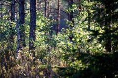 weelderig vroeg de lentegebladerte - trillende groene de lente verse bladeren van Stock Afbeelding