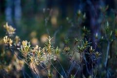 weelderig vroeg de lentegebladerte - trillende groene de lente verse bladeren van Stock Foto's