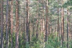 weelderig vroeg de lentegebladerte - trillende groene de lente verse bladeren van Stock Afbeeldingen