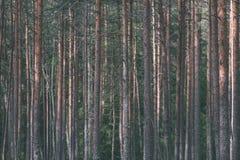 weelderig vroeg de lentegebladerte - trillende groene de lente verse bladeren van Royalty-vrije Stock Foto's