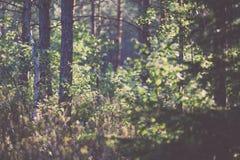 weelderig vroeg de lentegebladerte - trillende groene de lente verse bladeren van Stock Foto