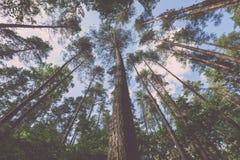 weelderig vroeg de lentegebladerte - trillende groene de lente verse bladeren van Royalty-vrije Stock Fotografie