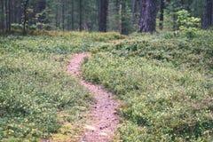 weelderig vroeg de lentegebladerte - trillende groene de lente verse bladeren van Royalty-vrije Stock Foto