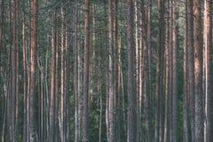 weelderig vroeg de lentegebladerte - trillende groene de lente verse bladeren van Royalty-vrije Stock Afbeelding