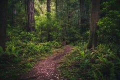 Weelderige bos wandelingsweg Stock Foto's